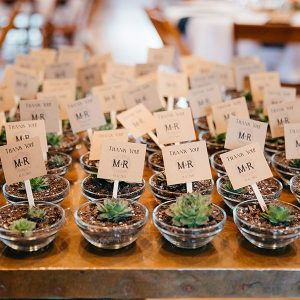 Succulent plants as wedding favours